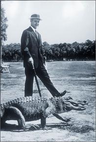 Hilton Head Real Estatecharles Fraser The Alligator And
